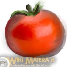 pomodoro_raccolta_lavorazione_pomodori_wikimatera_matera